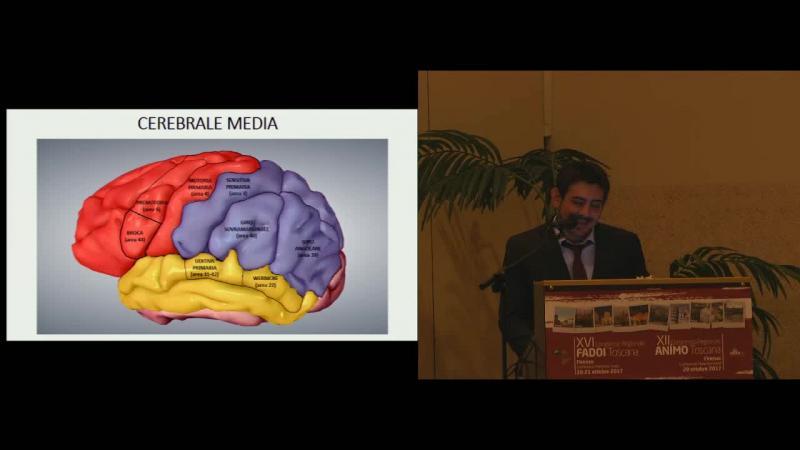 Anatomia della circolazione cerebrale e territori di irrorazione