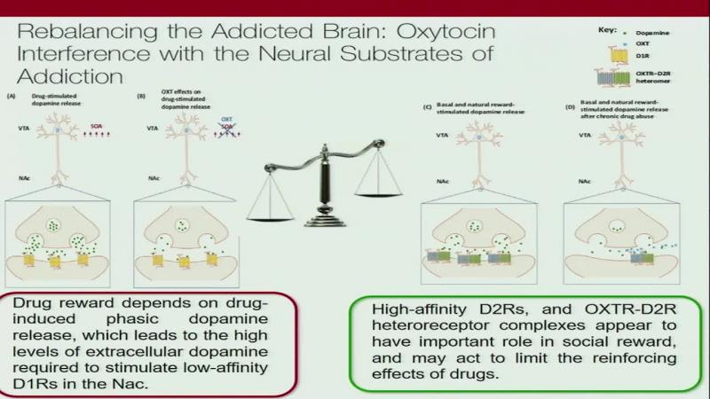 Oxytocin in (opioid) addiction: from early discoveries to the present