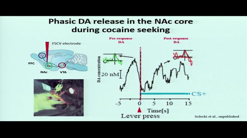 Ventral tegmental area regulation of cocaine and oxycodone craving